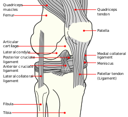 Knee Diagram