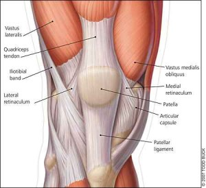 patella tracking muscles